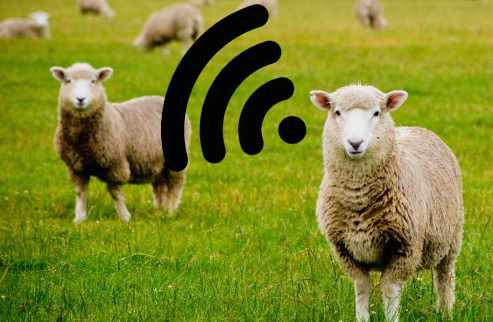 Sheep WiFI