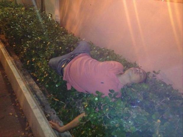 Why Do We Need Sleep - bush