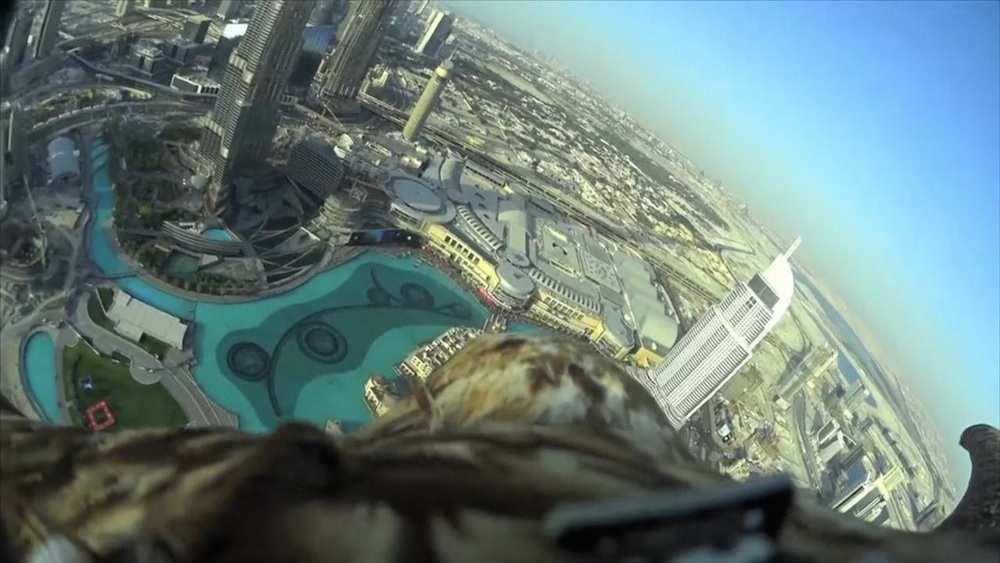 Dubai Eagle