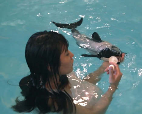 I-Wanna-Deliver-A-Dolphin-by-Ai-Hasegawa_dezeen_4