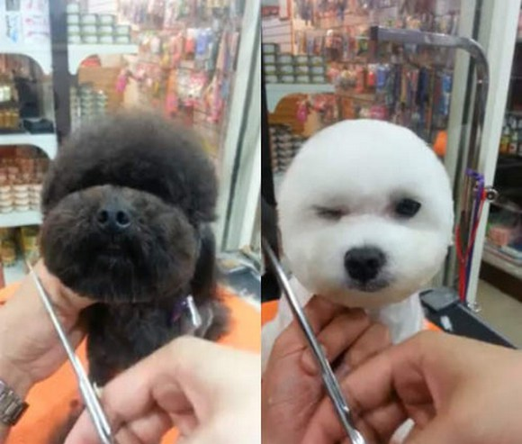 Geometric Dog Hairstyles 1
