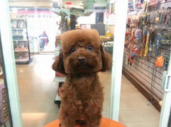 Geometric Dog Hairstyles 3