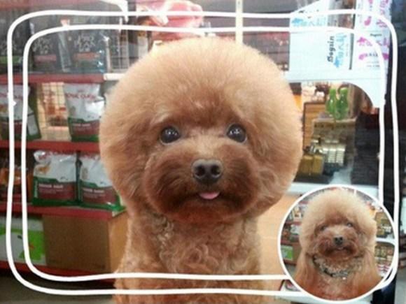 Geometric Dog Hairstyles 7