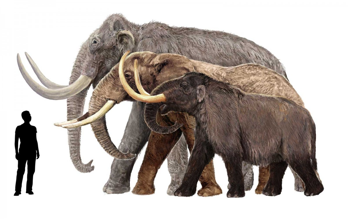 Places You Can't Visit - Mammoths