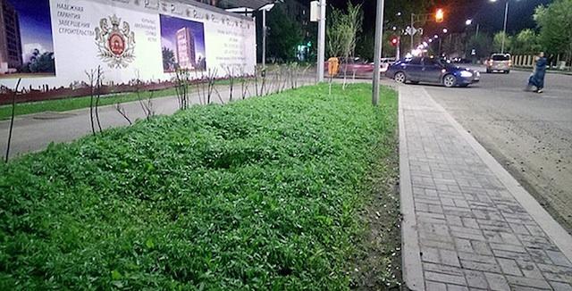Weed Plants