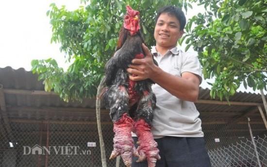 Mutant Chicken 1