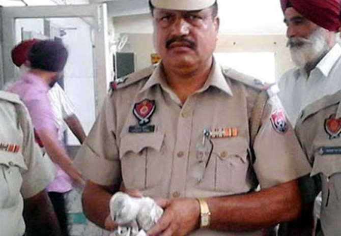 Spy Pigeon Arrested India