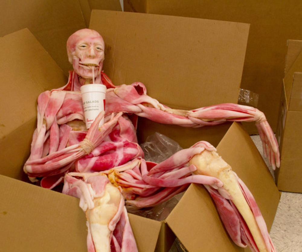 SynDaver - Synthetic Cadaver - Just Chilling