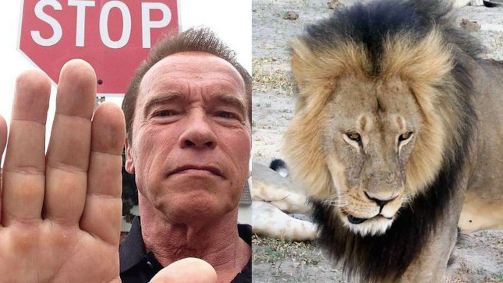 Arnold Schwarzenegger Cecil The Lion