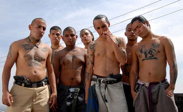 Avocado - Mexican Gang