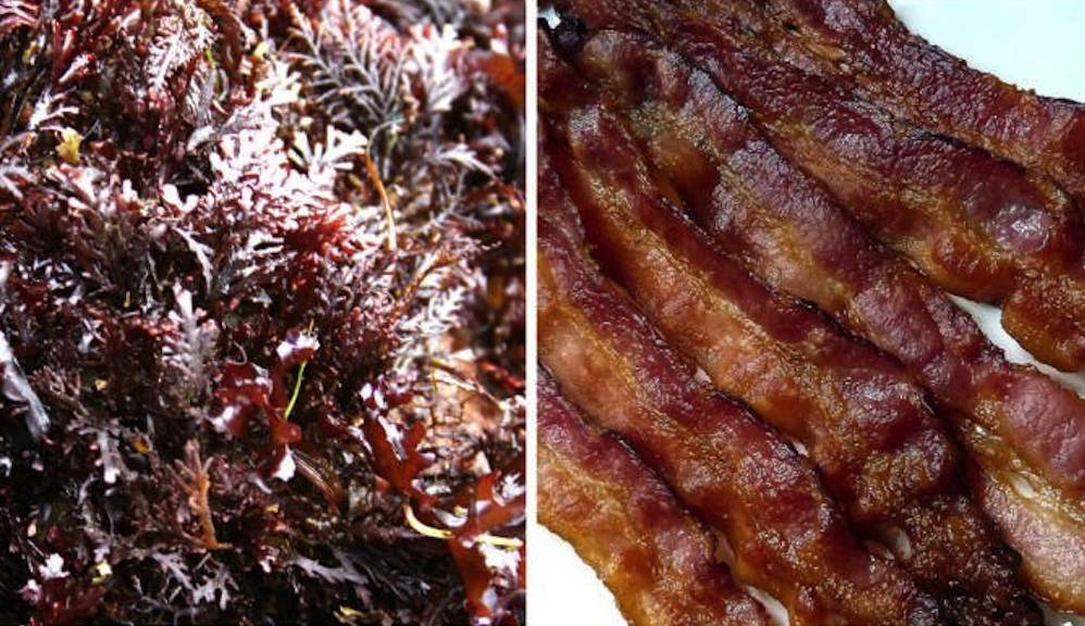 Bacon Flavoured Seaweed