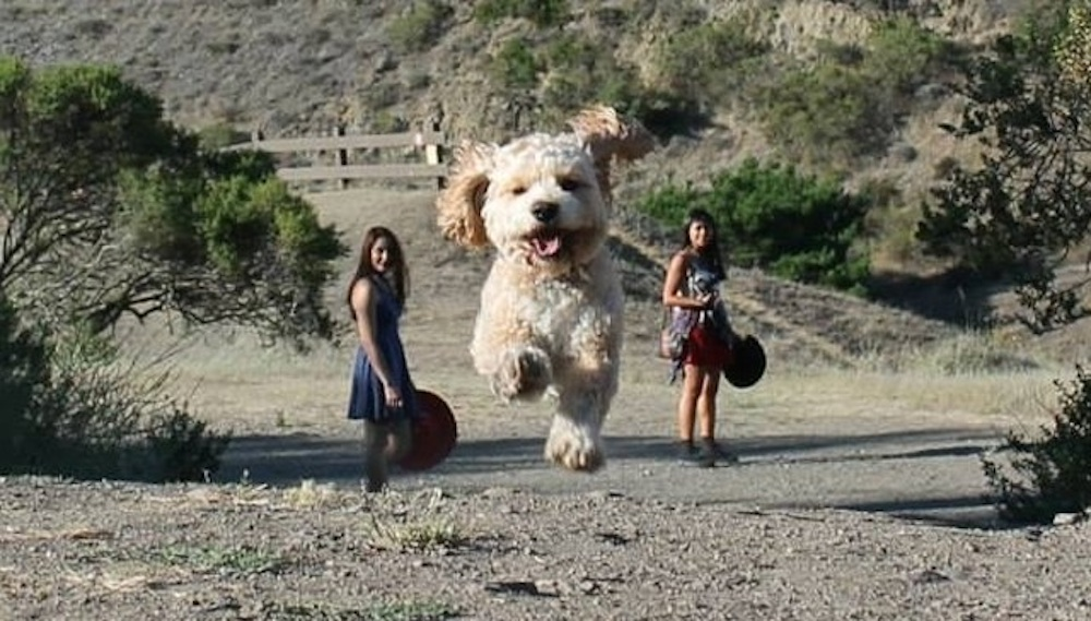 Perfectly Timed Pictures Dogs Huge Featured