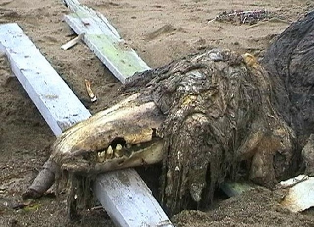 Russian Sea Monster 2006 2