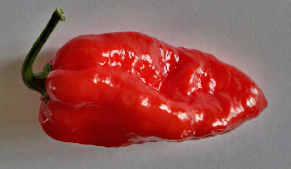Komodo Dragon Pepper