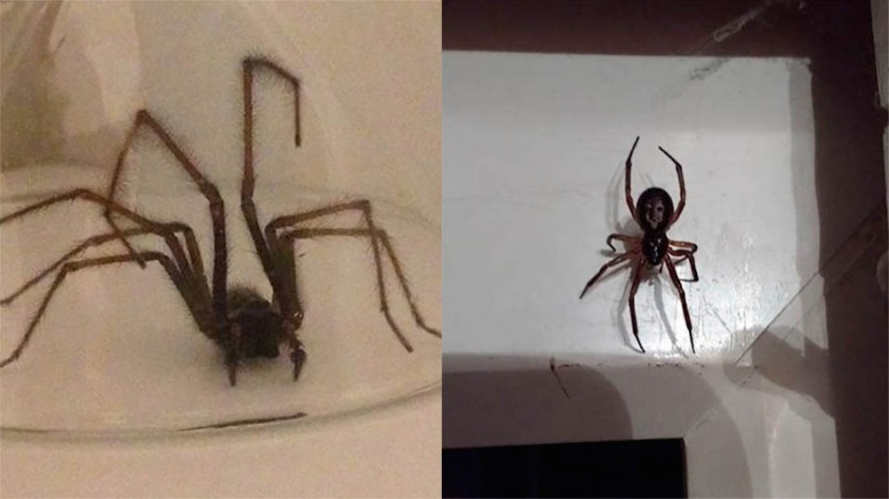 Terrifying Spiders