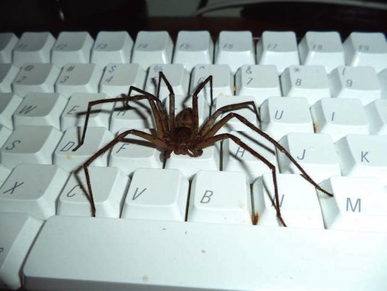 spider dope keyboard