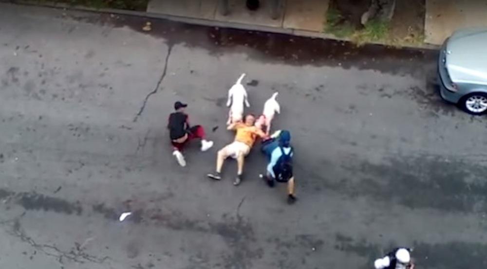 Brutal Pit Bull Attack