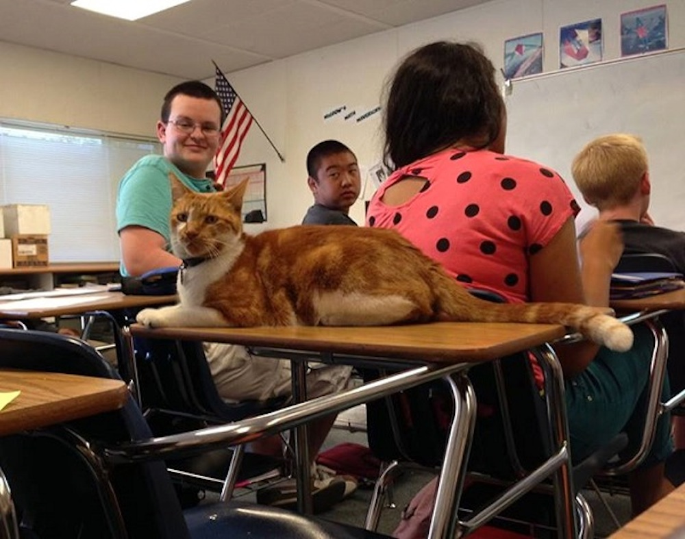 Bubba The Cat School