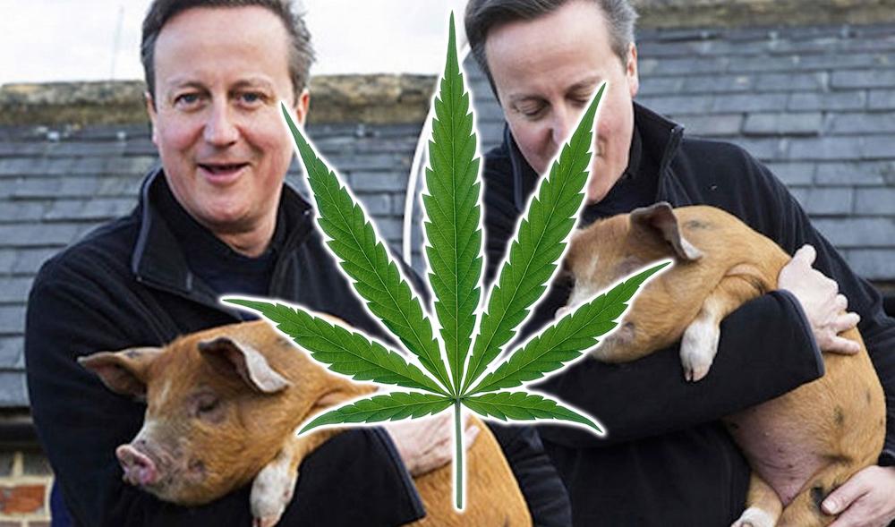 David Cameron Pig Weed