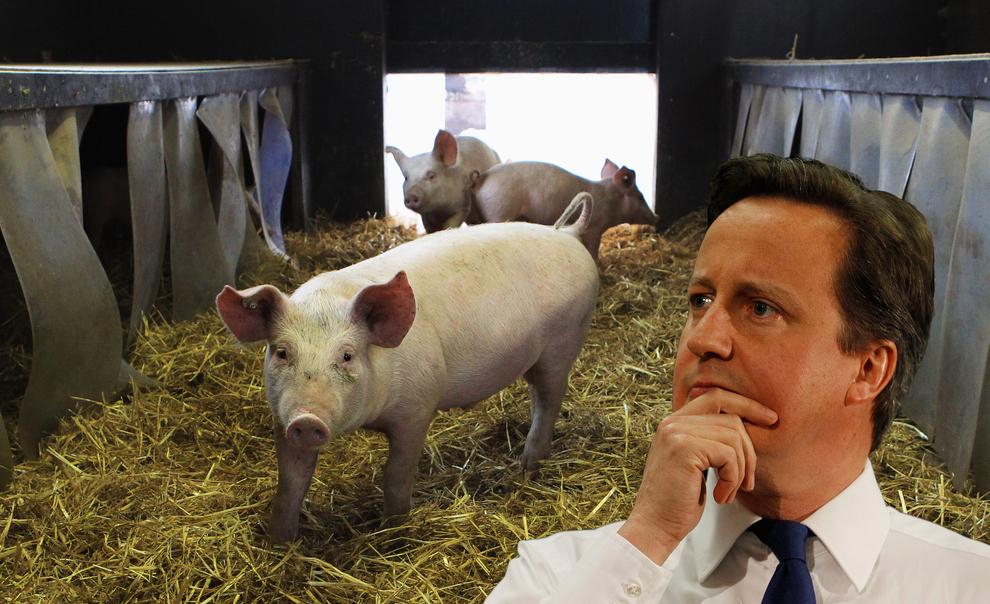 David Cameron Pig