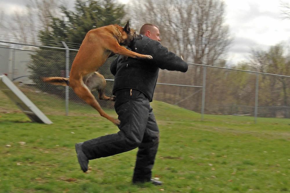 Dog Attacks Man