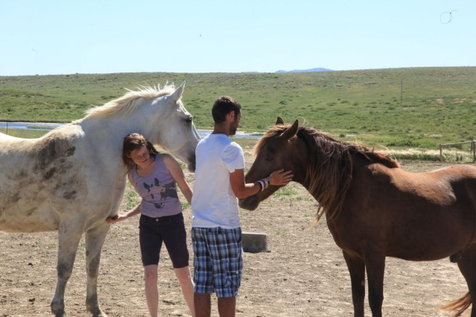 Longboarders Hanging Out With Horses