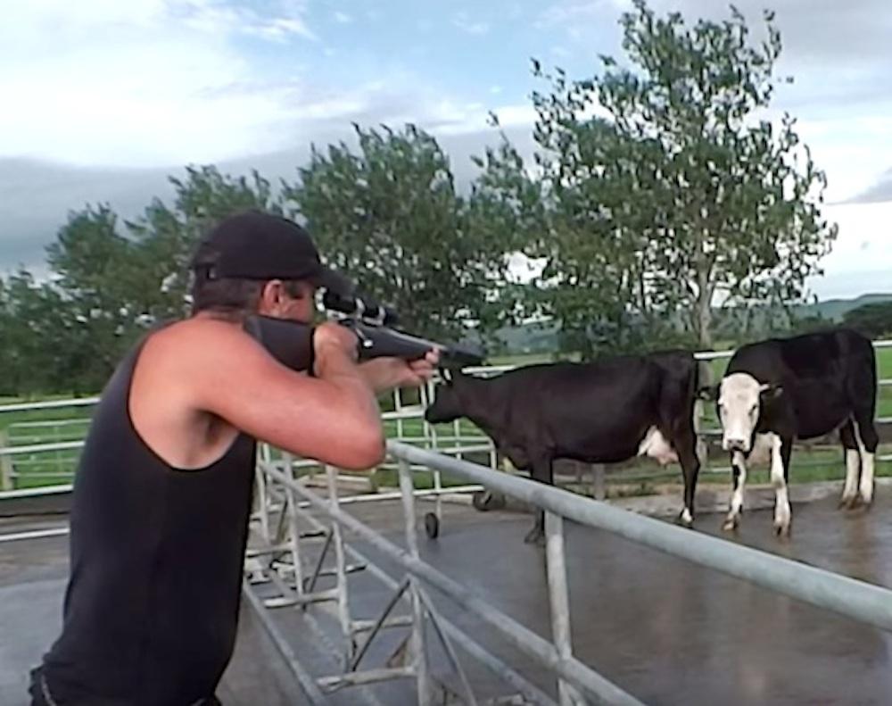 Shooting Cows