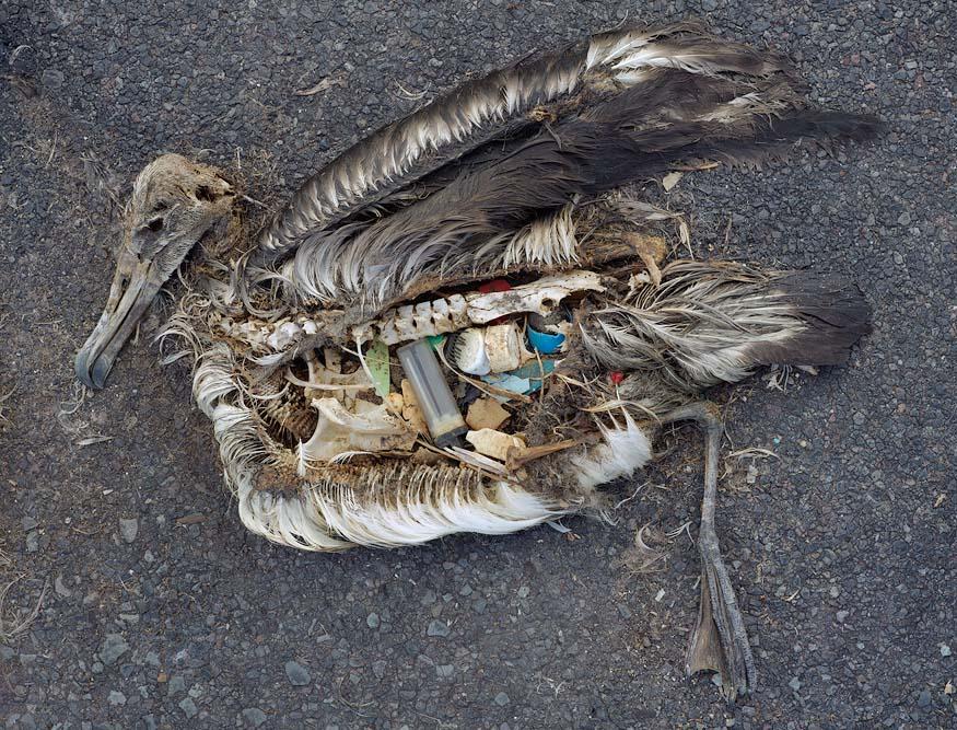 Smoking Sucks - Environment Dead Bird