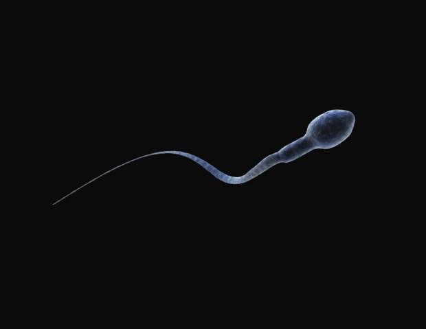 Single Sperm cell