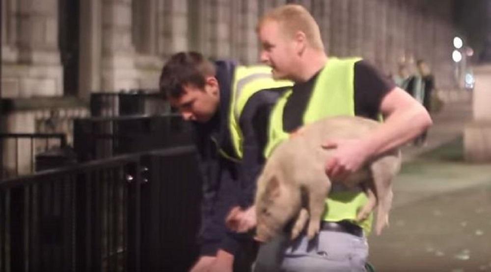 Trollstation Pigs