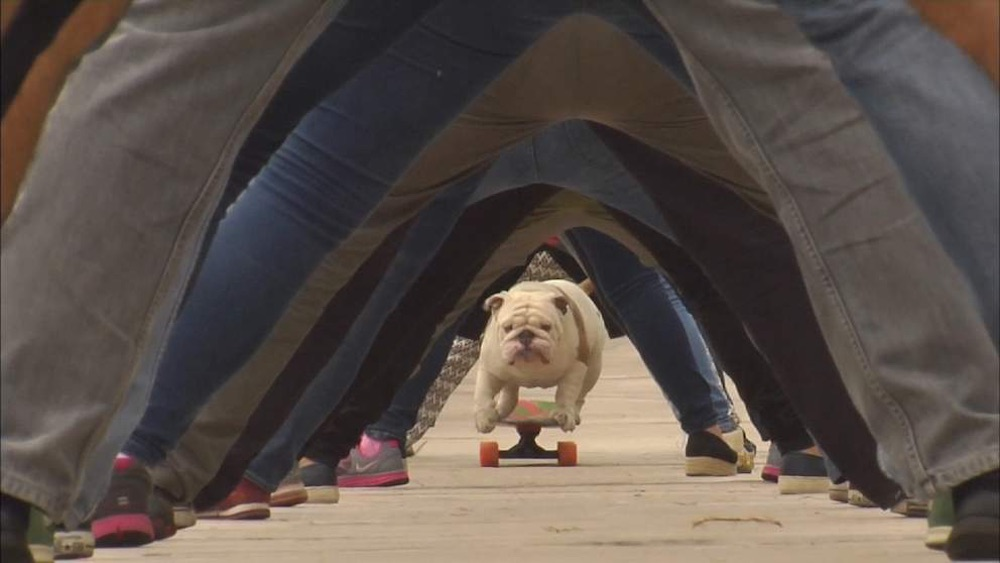 Bulldog Skateboarding World Record