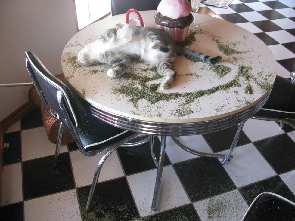 Catnip Heaven