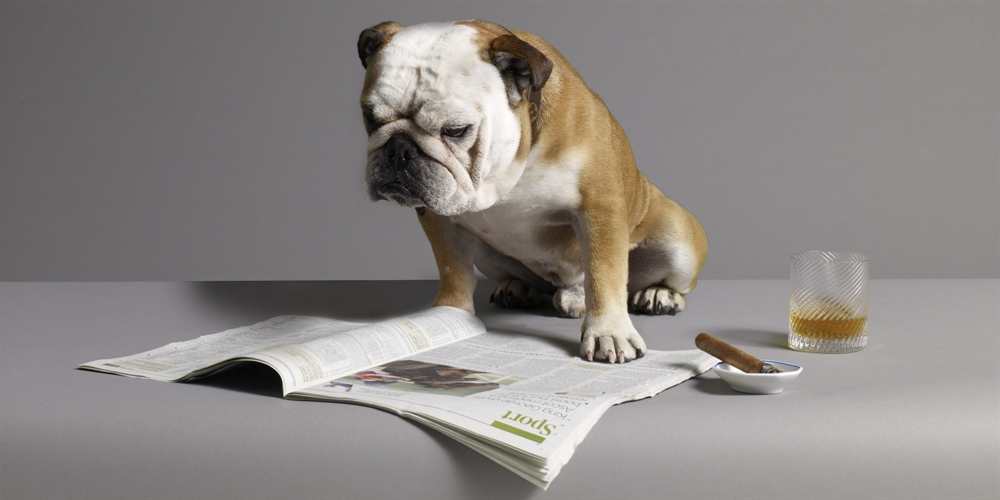 Time To Grow Up - Dog Reading Newspaper