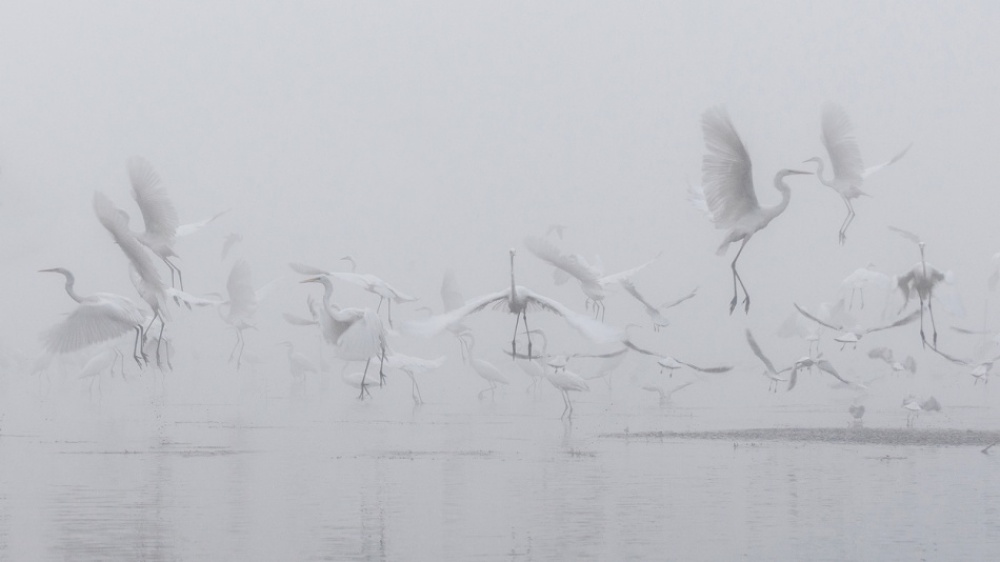 Without Photoshop - Egret
