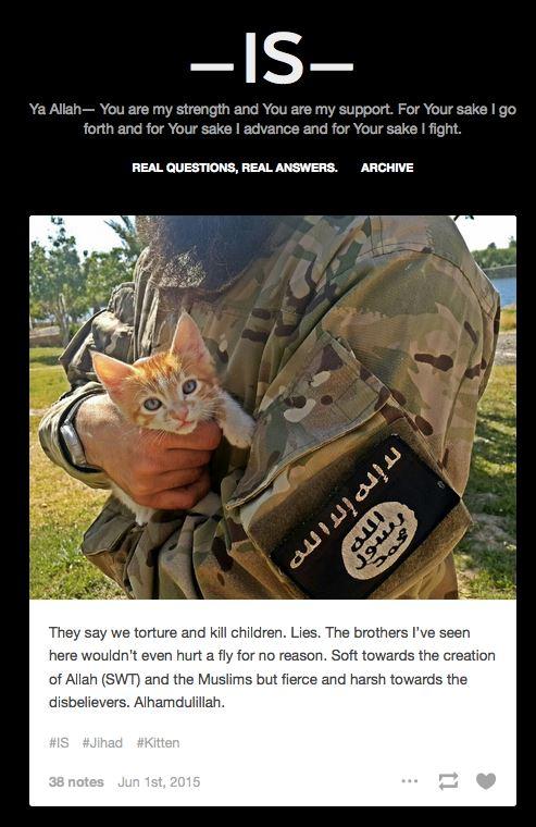 is kittens