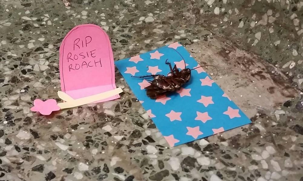 roach header