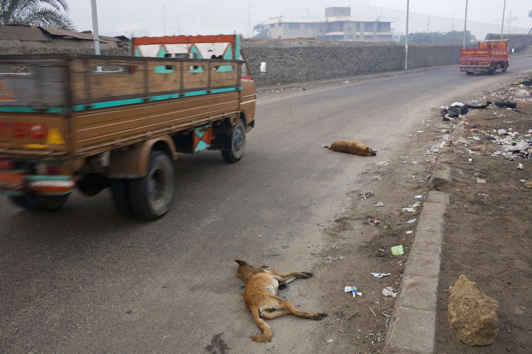 Zabaleen of Moqqatam - Dead Dogs
