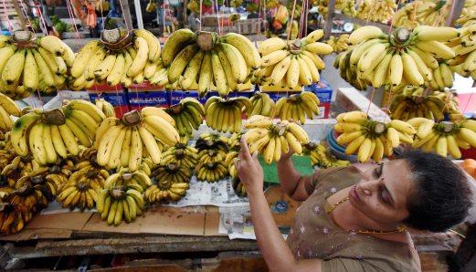KLANG 05 JANUARY 2016. Perniaga, M Sumathi, 43 menyusun buah Pisang ketika meniaga di Pasar Besar Meru, Klang. STR/MUHAMMAD SULAIMAN *** Local Caption ***