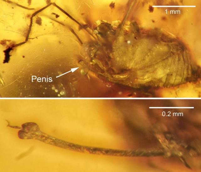 spider erection