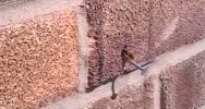 Bee Removing Nail Wall