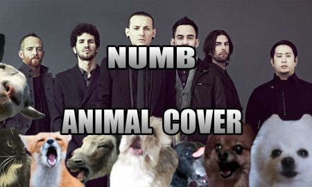 Numb Animal Cover