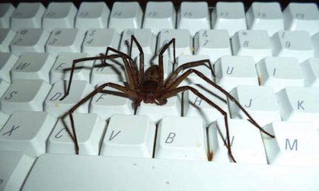 spider dope keyboard