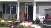 Alligator Trying To Ring Doorbell