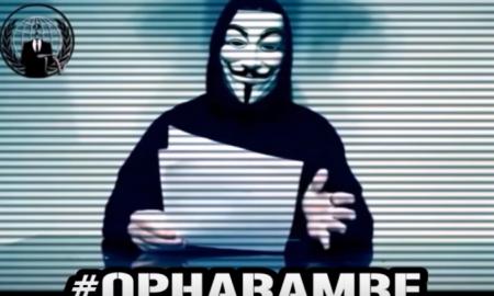 Anonymous Gorilla