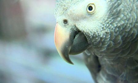 Parrot Witness