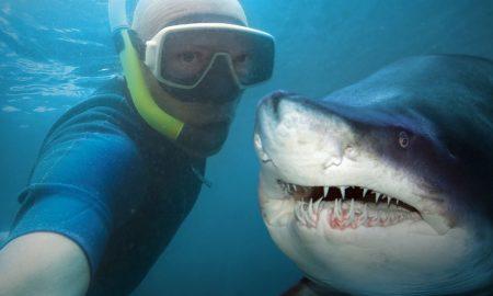 SharkSelfie2