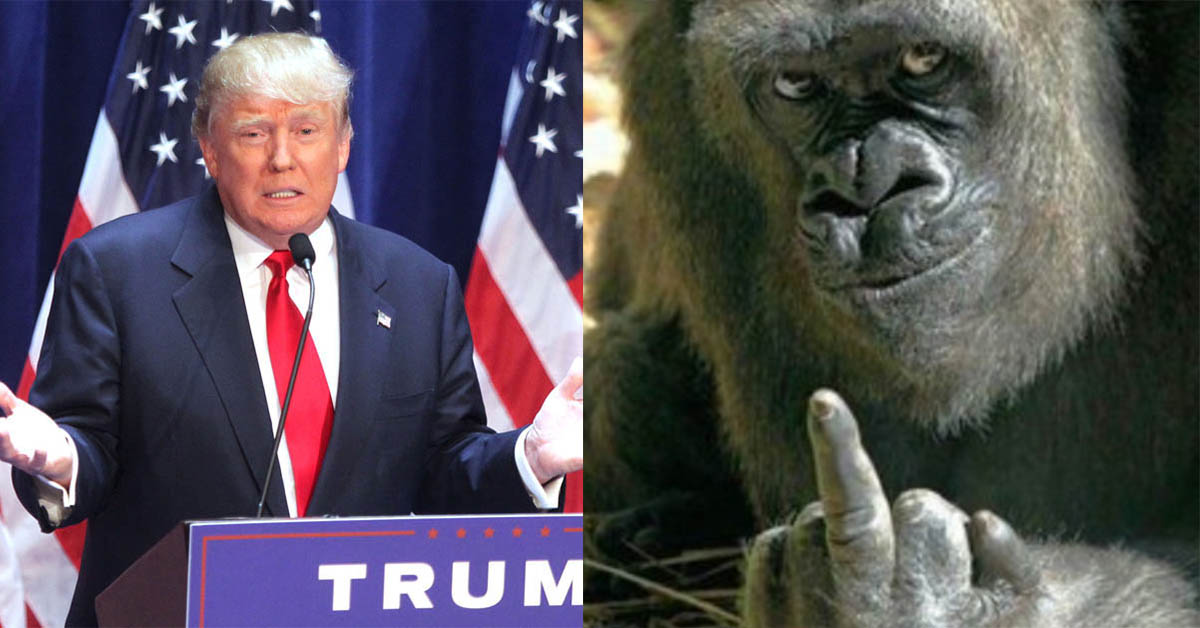 Trump Gorilla
