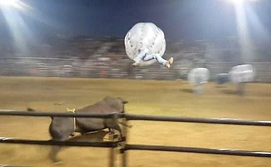 Bull Zorbs