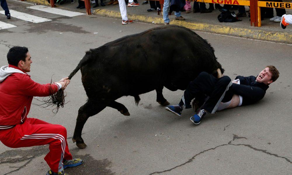 Bull in the butt video