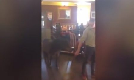 drunk pony